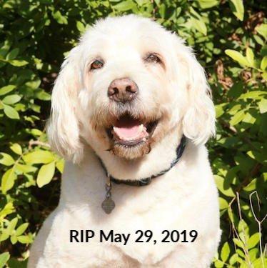 Bruiser, Company mascot, RIP May 29, 2019